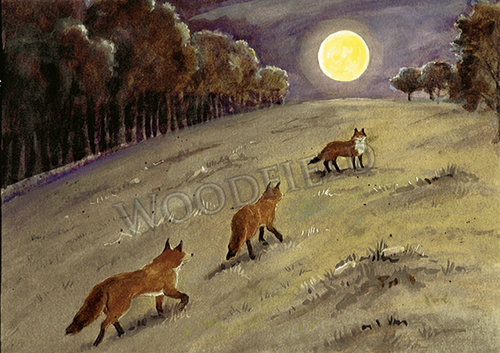 WF#307-foxes-moonlight